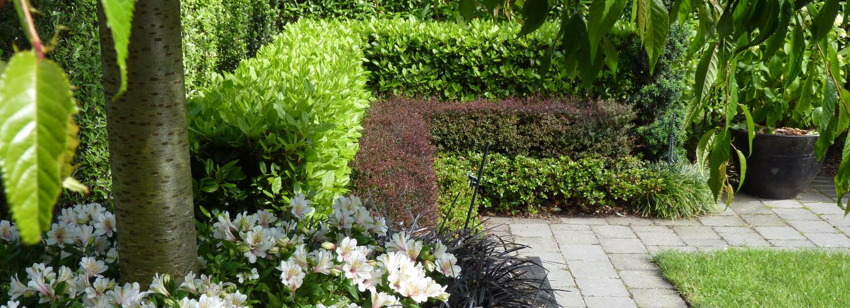 Garden with NZ Native plants